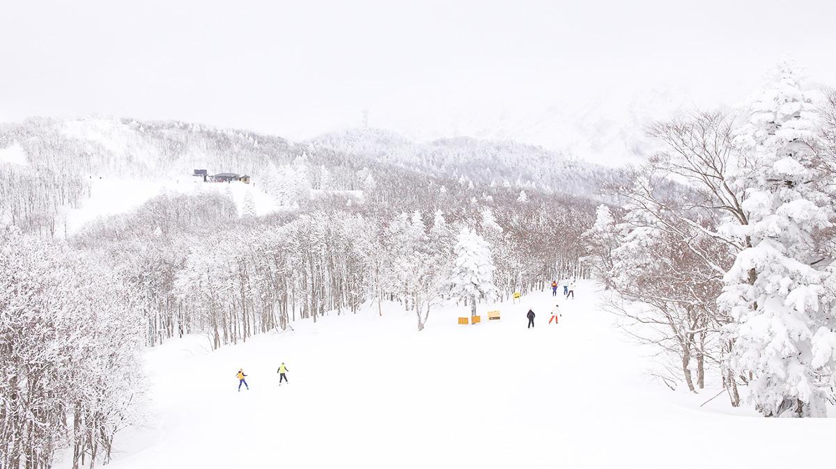 Ski Journal 3